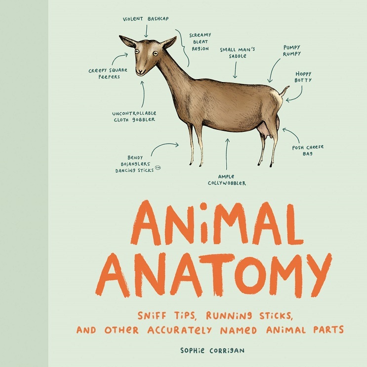 Pre Order Animal Anatomy Sniff Tips Running Sticks And Other